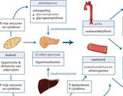 Het metabool syndroom en de cardiovasculaire gevolgen