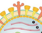 De jaarlijkse griepcampagne: lessen uit het Academisch Medisch Centrum