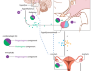 Migraine en orale anticonceptiva: een hormonaal samenspel